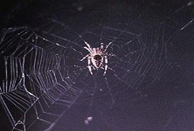 Spacweb