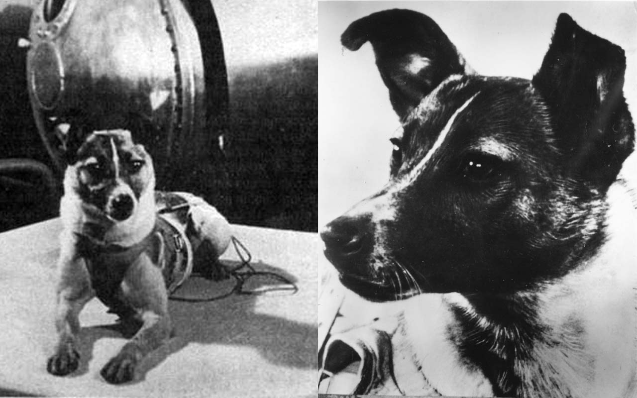 laika-1st-dog-in-space