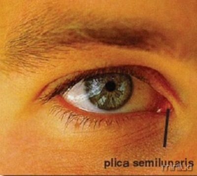 plica semilunaris swollen eye allergies - 400×357