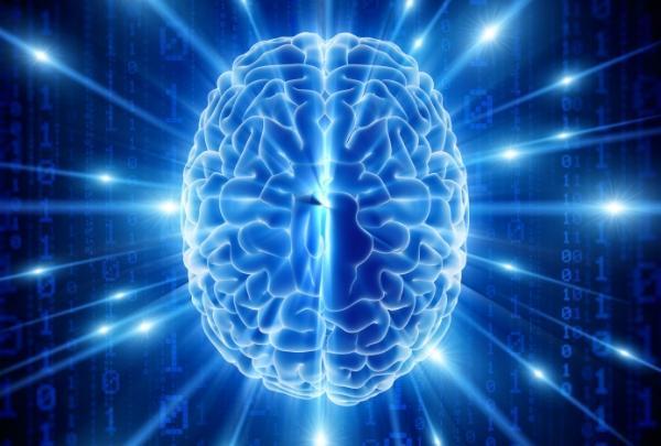 Hersenen_600