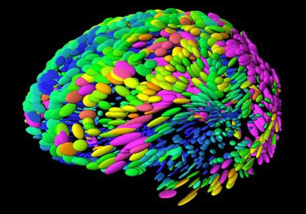 brain-template-100413-02