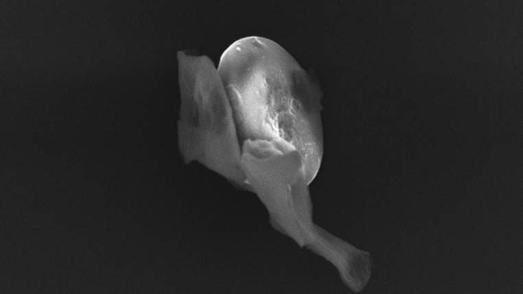 biologicalentitiesfromthestratosphere-1-762x428