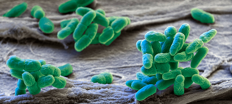 micro-organisms-microorganisms-life-science-centre-education