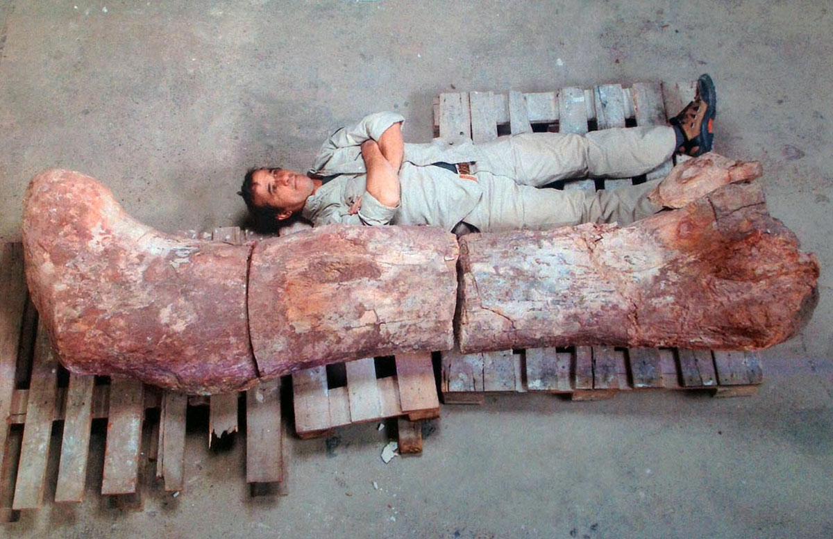 این تصویر که در تاریخ 16 می 2014 گرفته شده فسیل ساق پای دایناسوری غول پیکر را نشان می دهد که به اندازه قد یک انسان است.