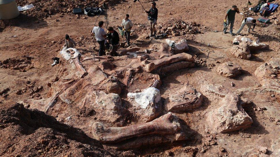 استخوان های فسیل این دایناسور غول پیکر در منطقه فلیچا در حدود 250 کیلومتری غرب پاتاگونیا کشف شد.