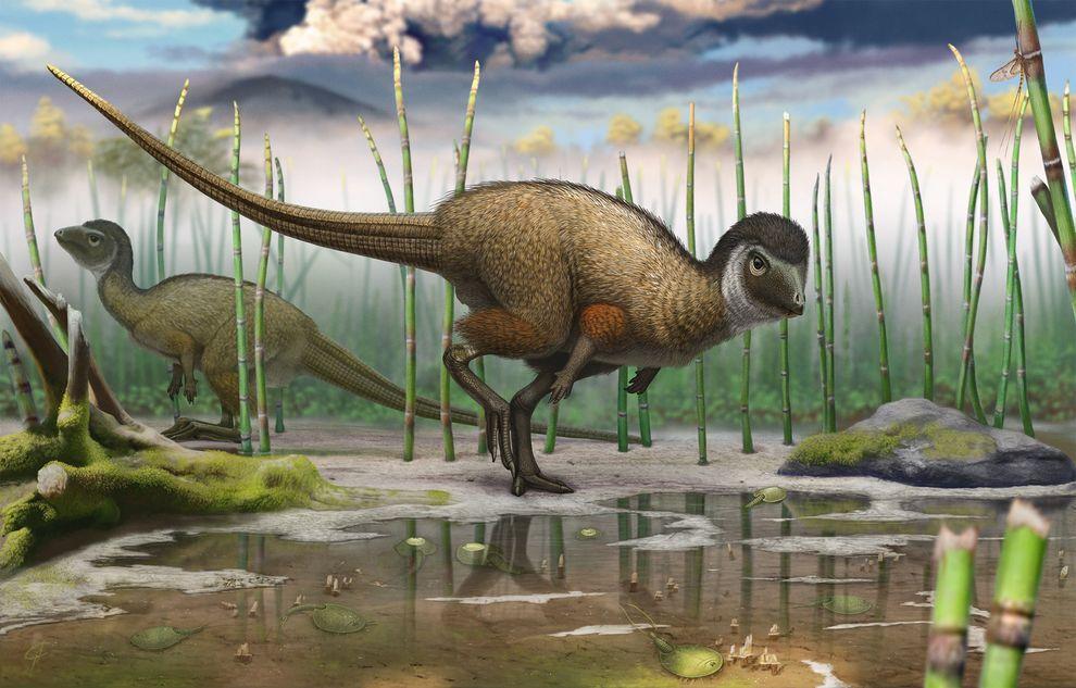 کشف فسیل کولیندادروموس زابایکالیکوس، استنباط های موجود درباره تکامل دایناسورها را به چالش کشید