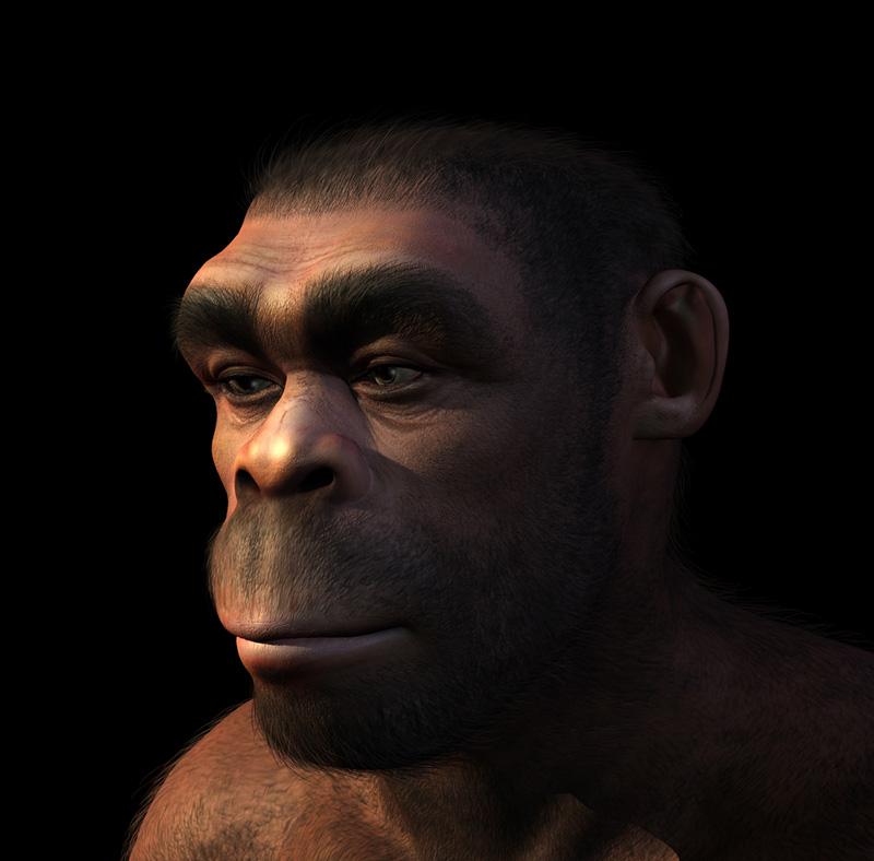 homo-erectus-illustration