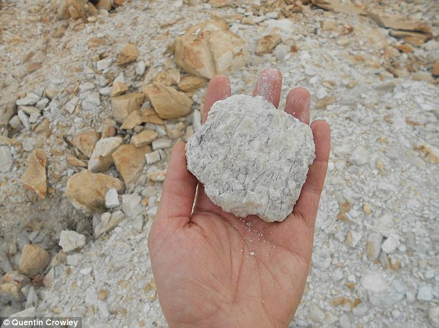 در این تصویر نمونه ای از این خاک باستانی را مشاهده می کنید که در 3.02 میلیارد سال پیش در حضور اکسیژن زمین، دچار هوازدگی شده است. دانشمندان معتقدند چنين ميزان پايداري از اكسيژن تنها ميتوانسته به واسطه ارگانيزمهای کهن به وجود آمده باشد.