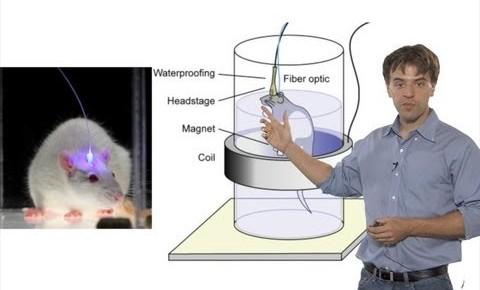 """تصویری از دکتر """"کارل دیسورت"""" که با استفاده از روش «اپتوژنتیک» توانست حافظۀ موش ها را پاک کند."""