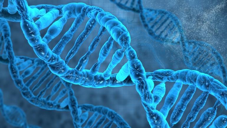 پیش از این تصور میشد DNA و RNA تنها مولکول هایی هستند که اطلاعات ژنتیکی را ذخیره میکنند، اما دانشمندان نشان دادند مولکول مصنوعی XNAs نیز می تواند اطلاعات ژنتیکی و فرآیندهای کاتالیزوری مورد نیاز برای حیات را پشتیبانی کند.