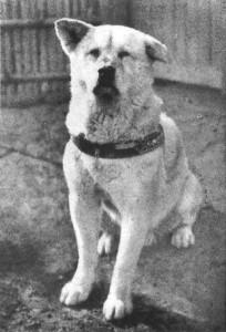 تصویری از سگی بنام هاچیکو