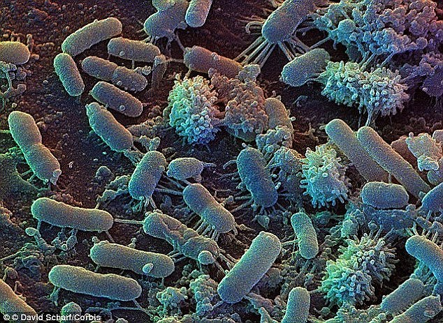 تحقیقات نشان می دهد باکتریها می توانند در سیاراتی که حاوی دیاکسیدکربن فوق بحرانی هستند نیز وجود داشته باشند.