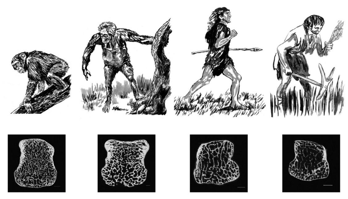 bones-evolution