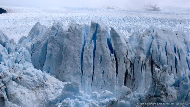 حیات پیچیده ی موجودات در میان یخ های زمین