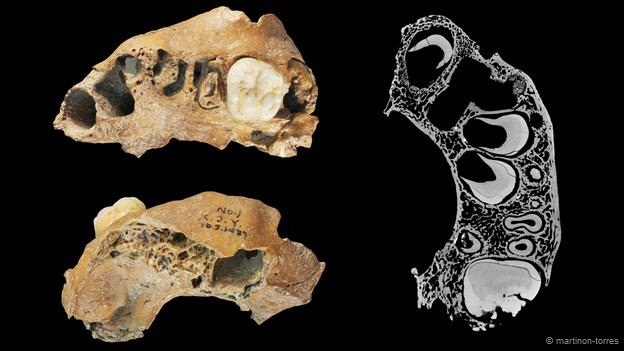 تصویری از استخوان های فک این موجود باستانی
