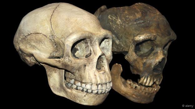 دانشمندان فسیل جمجمه ای باستانی را کشف کردند که هم شبیه نئاندرتال ها است و هم شبیه انسان های مدرن.