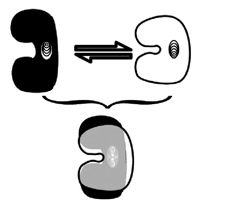 تصویر بالا: دو حالت از توبولین که در آن یک رویداد کوانتومی واحد (مثلا موقعیت الکترون) با یک ترکیب پروتئینی جفت شده است. تغییر وضعیت میان دو حالت می تواند در چند نانوثانیه تاچند پیکو ثانیه رخ دهد. تصویر پائین: توبولین در حالت وابسته کوانتومی (دو حالت بر هم نهیده)