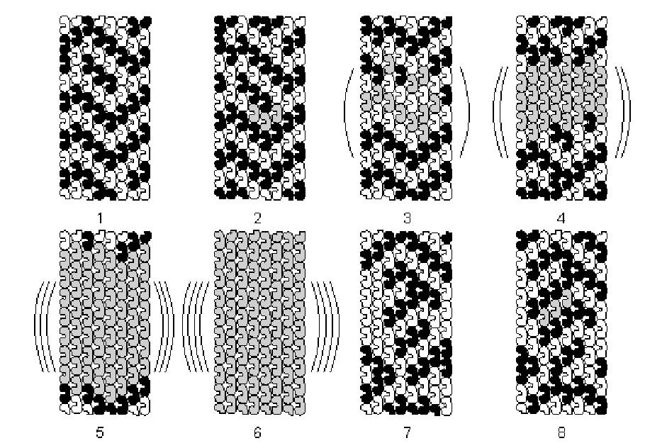 شبیه سازی مرحله به مرحله ماشین خودکار ریز لوله. این وابستگی در توبولین های ویژه ای (خاکستری) رخ می دهد که الگوی رزونانسی (رفت و بر گشتی بین دو وضعیت کوانتومی) دارد. در هماهنگی با توبولین های میکروتوبل های دیگر،بالاخره در مرحله 6 استانه بحرانی برای چروکیدگی (تقلیل) خودبه خودی اُرک-اُر فرا می رسد. آگاهی اُرک-اُر در انتقال مرحله 6 به مرحله 7 رخ می دهد. مرحله 7 حالت تقسیم جرم را بیان می کند که با محاسبه (جهت تنظیم عملکرد عصبی) به دست می آید.