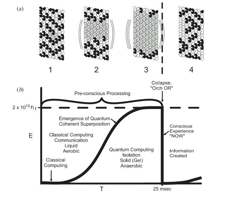 نموداری شماتیک از تولد وابستگی کوانتومی. رابطه تعداد توبولین های درگیر حالت وابستگی کوانتومی و طول زمان وابستگی کوانتومی در ریز لوله ها.500 میلی ثانیه زمان مورد نیاز فرآیند پیش آگاهی. مساحت زیر نمودار، تفاوت های جرم – انرژی را با زمان چروکیدگی مرتبط می کند. این درجه از وابستگی های هندسه های فضا- زمان (که معادل با مساحت زیر نمودار است)، منجر به تقلیل کلاسیک کوانتومی می شود. ( اُرک-اُر)