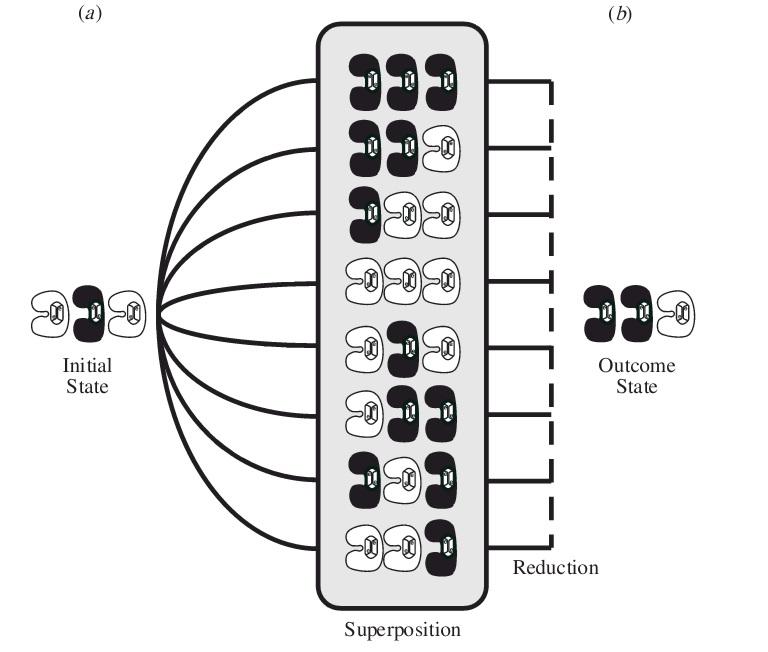 شکل مرکزی: سه توبولین وابسته، با نمایش جداشدگی شماتیک فضا- زمان. این سه توبولین در میان هشت ترکیب احتمالی از تقلیل_ متناظر با 8 ترکیب هندسی فضا زمانی _محاصره شده اند.