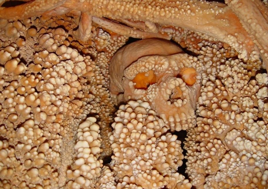 تصویری از اسکلت سالم و دستنخورده انسان نئاندرتال که در یک غار آهکی در نزدیکی التامورا - ایتالیا پیدا شده است.