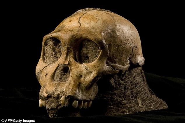 دانشمندان موفق به کشف یک لایه نازک پوست انسان نخستین مربوط به 2 میلیون سال پیش شدند.