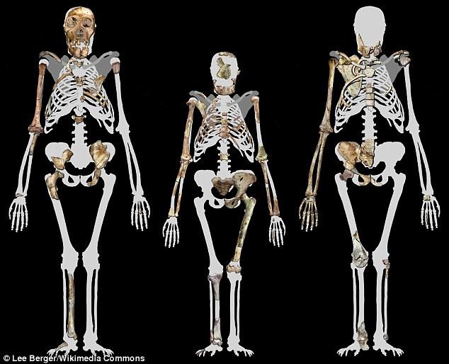 تصویری از فسیل و استخوان های کشف در این پژوهش