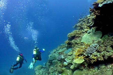 diving-kish1