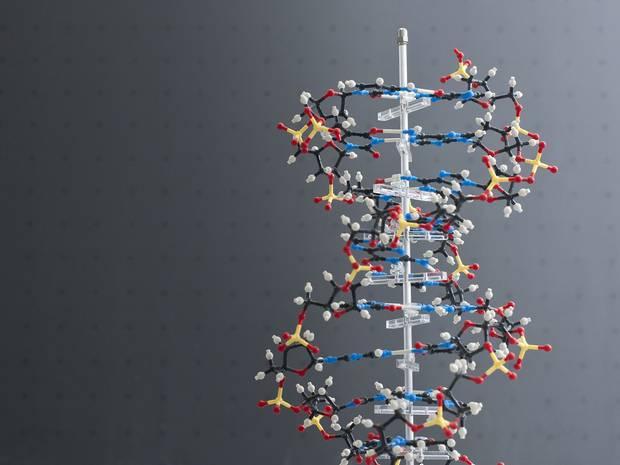 Molecule-of-DNA-Rex