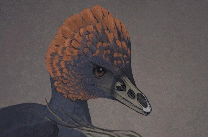 chicken-dino-beak-velociraptor-670-2