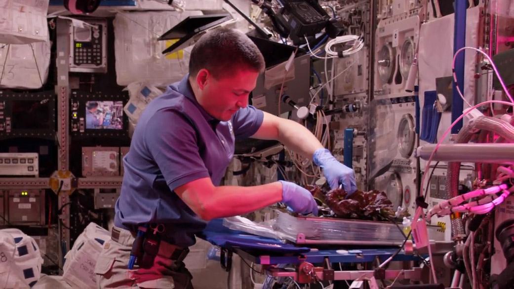 فضانورد ایستگاه فضایی بینالمللی در حال برداشت محصول سبزیجاتی که در این ایستگاه پرورش داده شده است.