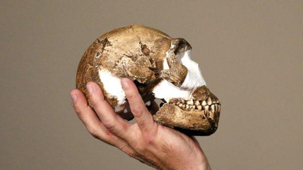 تصویری از استخوان جمجمه ی انسان نالدی که در این تحقیقات کشف شد.