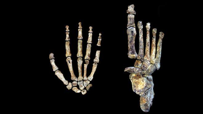 به غیر از قوس انگشتان، دست و پای این موجود خیلی شبیه به انسان امروزی بوده است