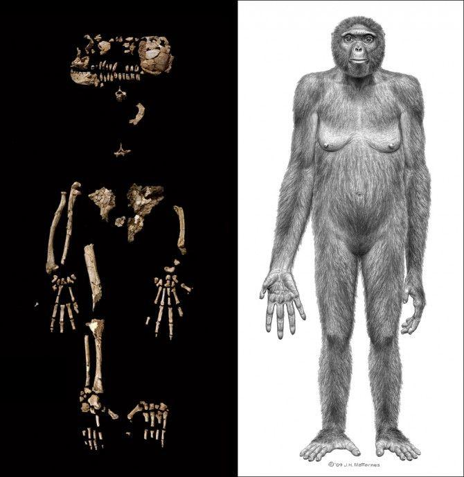 استخوان های لوسی و تصویر بازسازی شده از آن