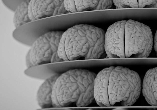 اندازه مغز