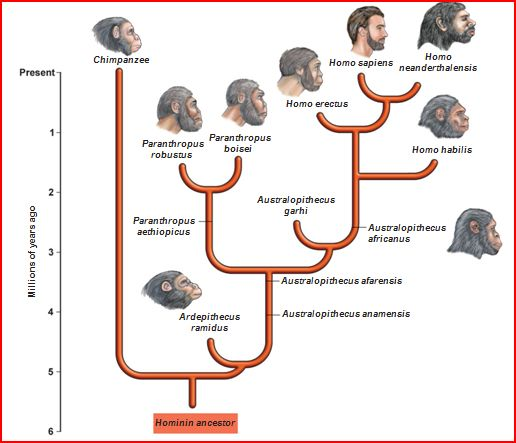 the evolutionary development of morality in primates Primates and philosophers: how morality evolved contains evolution in the development of our understanding the evolutionary origins of morality.