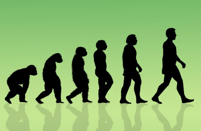 illustration-depicting-human-evolution