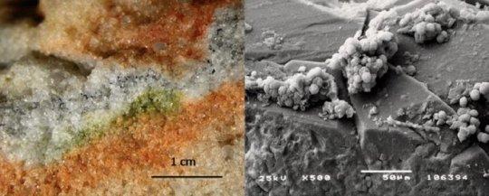 تصویری از میکروارگانیسم های کریپتواندولیتیک و قارچ های کرایماسیز از نگاه میکروسکوپ الکترونی