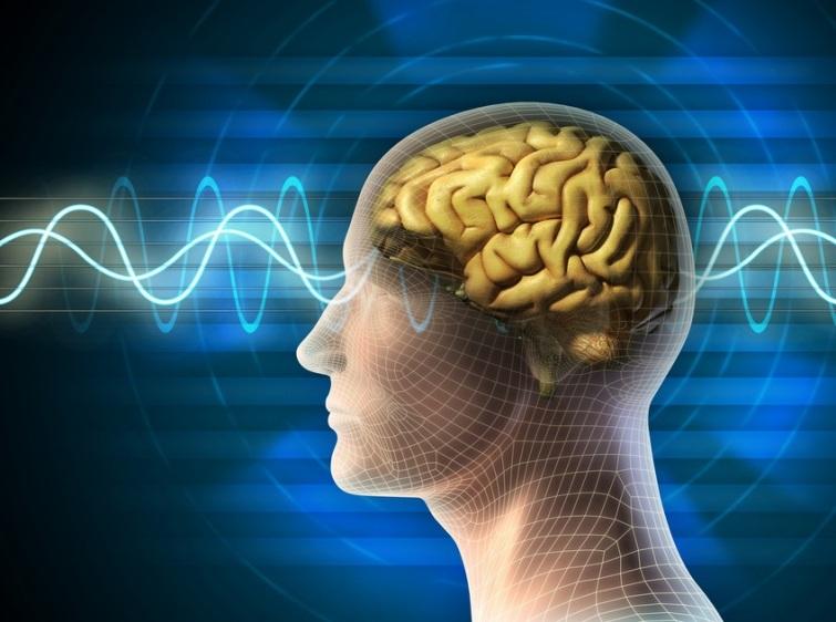 Brain+Science+Mindfulness+Training