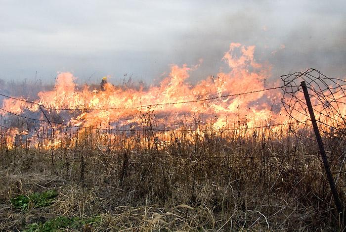DLE_2904_700-prairie-burn-in-full-force_19Nov2011