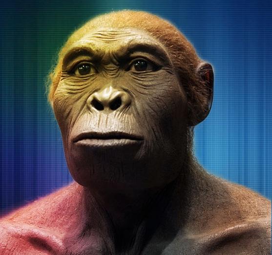 Homo_habilis_560