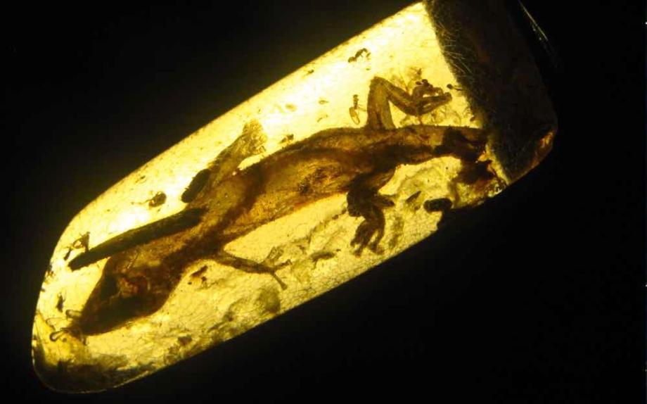 fossilized-lizard-found-inside
