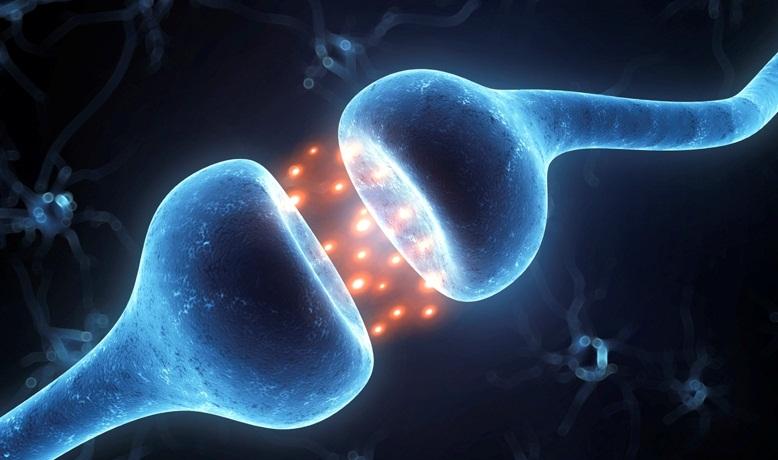 3d rendered illustration of an active receptor