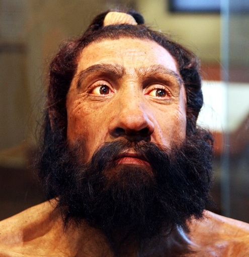 Homo_neanderthalensis_adult_male_-_head_model_-_Smithsonian_Museum_of_Natural_History_-_2012-05-17