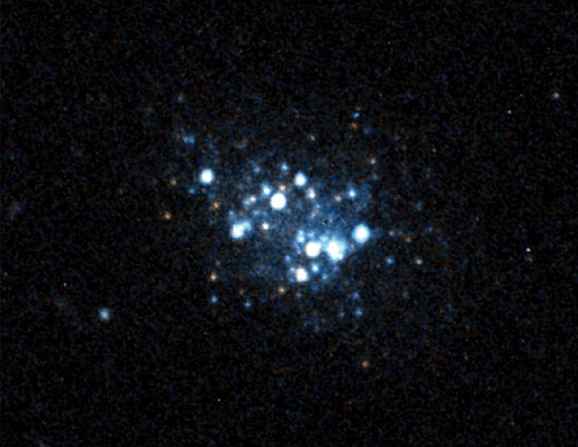 image_3865e-Leoncino-Dwarf