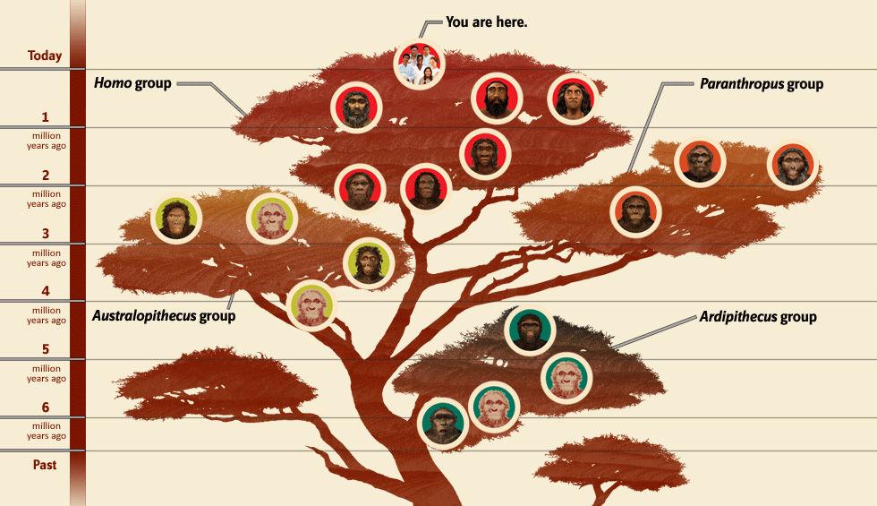 smithsonian-homo-sapiens-tree1-980x565