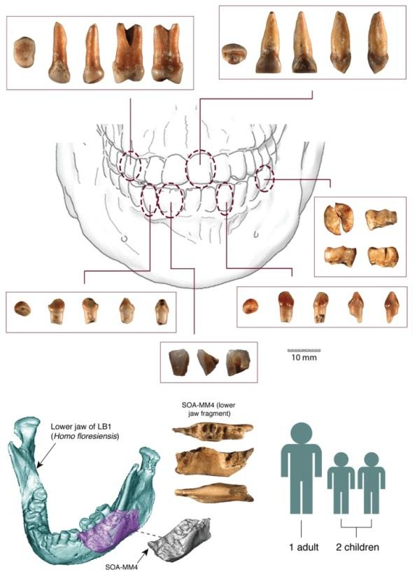 کشف بقای فسیلی انسان باستانی کوتوله در این کاوش جدید