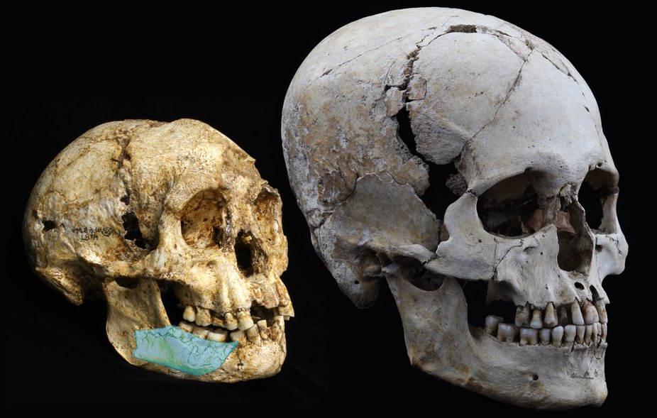 در سمت چپ عکس بقایای جمجمه ی انسان موسوم به هومو فلورسینسیس را در مقایسه با جمجمه انسان مدرن در دوره جومون ژاپن می بینید.