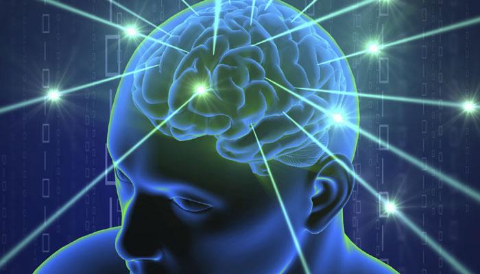 281277-brain-4