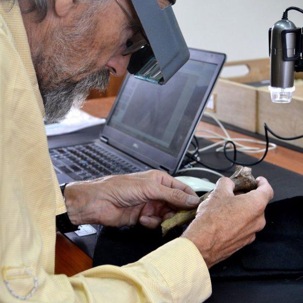 پروفسور کاپلمان و بررسی روی استخوانهای لوسی
